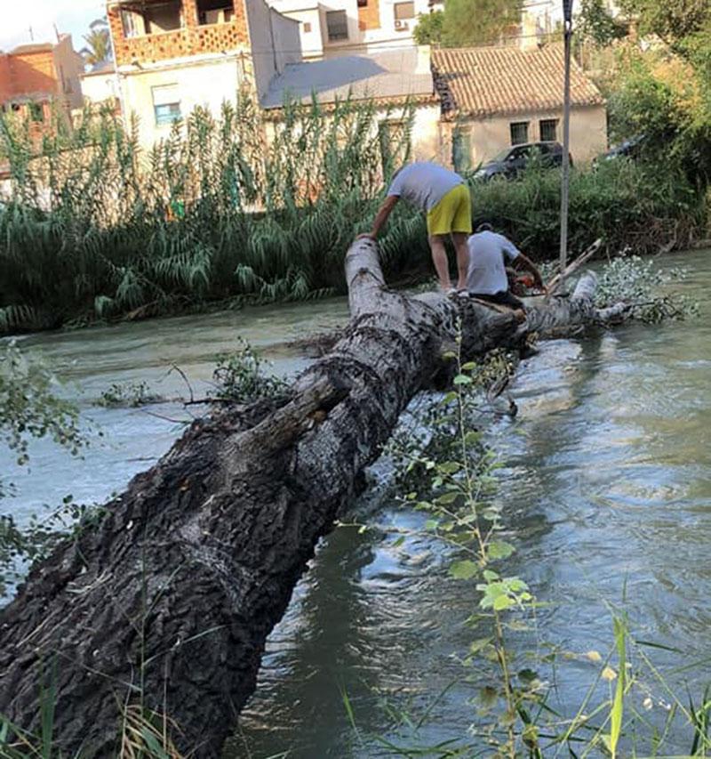 Retiran un gran árbol que había caído sobre el río