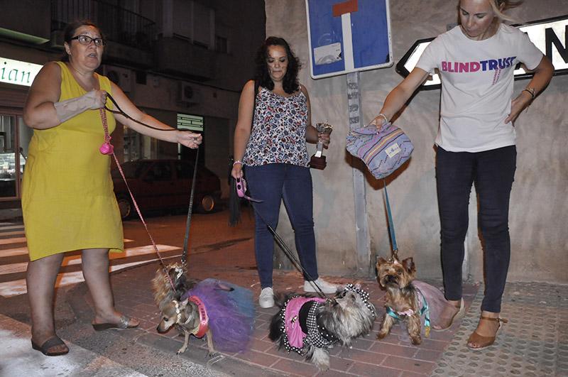 Exposición-canina3