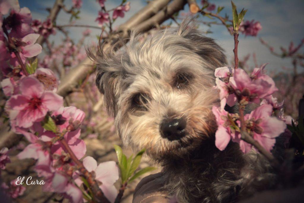 Ruta Floración por Tobi